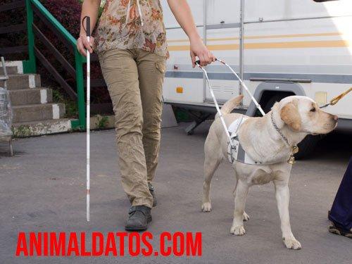 ventajas de los perros para invidentes