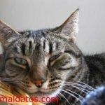 Cuando usar vitaminas para gatos mayores y cuales son sus ventajas
