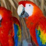 5 famosos animales en peligro de extinción en México, increíble que puedan desaparecer