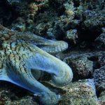 5 animales que respira por las branquias y lista adicional