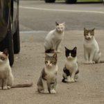Como ahuyentar gatos de mi casa o jardín sin hacerles daño