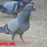 Tips y métodos sobre como ahuyentar palomas de mi techo o balcón sin lastimarlas
