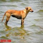 5 formas de como quitarle el calor a un perro y como prevenirlo