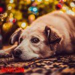 ¿Por qué tiemblan los perros? Causas más comunes y qué hacer para solucionarlo