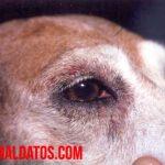 Tratamientos Caseros Contra la Tiña en Perros, ¡Conoce sus Causas y Prevención!