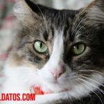 ¿A qué edad se puede esterilizar a una gata? Alternativas con explicación