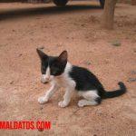 Como engordar sanamente a un gato desnutrido y flaco