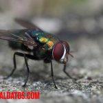 Conoce como evitar las moscas en casa conociendo como se reproducen