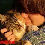 ¿Es verdad que los gatos tienen varios dueños? ¿No me quieren a mí sino a mi comida?