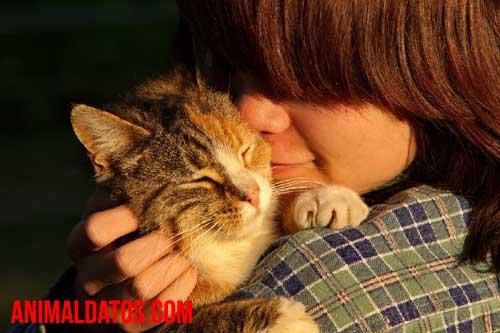 la infidelidad del gato