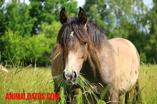 alimentacion de los equinos