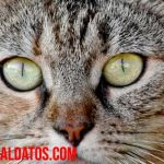Gatos en adopción: todo lo que necesitas saber antes de adoptar