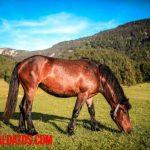 ¿Qué comen los caballos? La base de la alimentación equina
