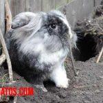 Porque los conejos hacen madrigueras y túneles bajo tierra