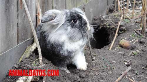 Porque los conejos hacen madrigueras