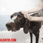 ¿Cómo bañar a un perro que no le gusta el agua? Tips