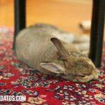 Como educar a un conejo para ir al baño, para que no muerda y más