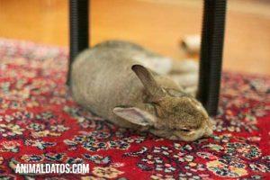 como educar a un conejo