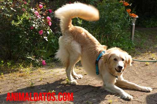 foto de perro mordiendo su cola