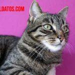 Como reconocer a un gato con estrés: síntomas, prevención y tratamiento