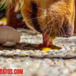 ¿Los perros pueden comer huevo? El debate de crudo o cocido