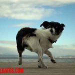 Conoce porque un perro se muerde la cola, motivos y soluciones posibles