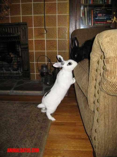 se puede adiestrar a un conejo
