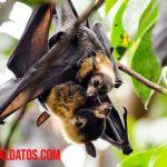 5 ejemplos de animales que vuelan (o casi) que no son pájaros