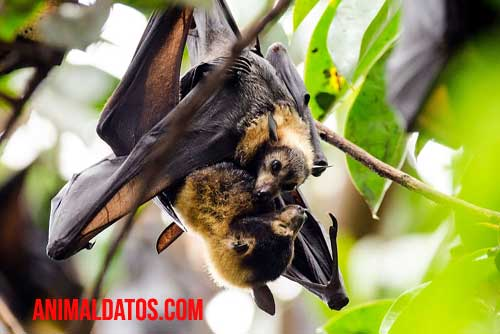 animales que vuelan