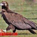 Qué son las aves rapaces, tipos que existen y ejemplos