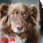 ¿Cómo saber cuando un perro es adulto y deja de ser cachorro? Síntomas y señales