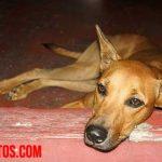 ¿Cuándo poner a dormir a un perro? La eutanasia cuando tu mascota sufre