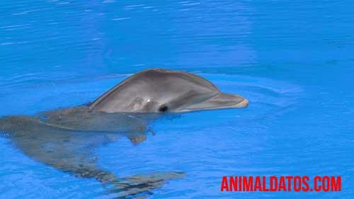 es verdad que los tiburones le tienen miedo a los delfines