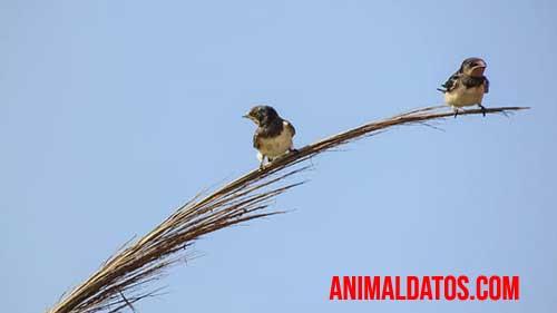la migración de las aves en invierno