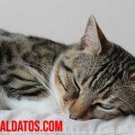 ¿Los animales sueñan cuando duermen, como las personas?