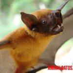 Murciélago pescador: características, alimentación, reproducción y datos curiosos