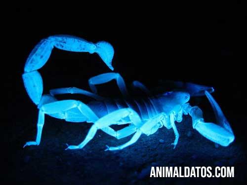 animales bioluminiscentes