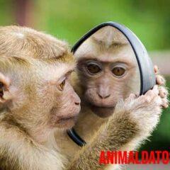 animales reconocen al espejo