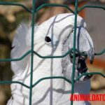 Datos y cuidados de la cacatúa blanca como mascota o ave de compañía