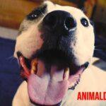 ¿Qué es el estornudo inverso en perros? Causas, cuidados y tratamiento