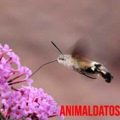 los animales mas pequenos del mundo