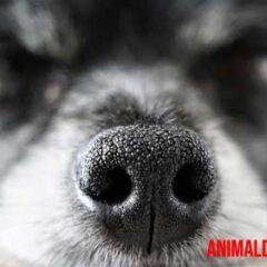 olfato de los perros