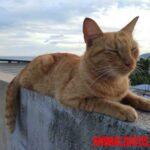 ¿Porque se van los gatos de la casa y no vuelven más? Motivos más comúnes