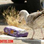 ¿Cómo afecta a las aves la contaminación y la polución ambiental?