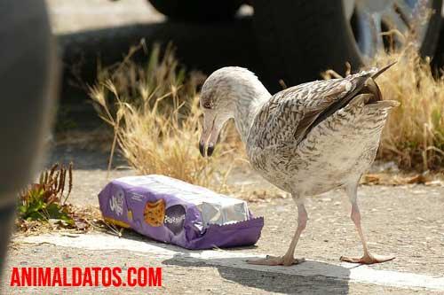 como afecta a las aves la contaminacion