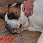 Como lidiar con la pérdida de una mascota muy querida