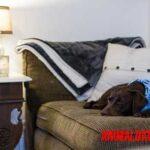 El aire acondicionado puede dañar a tu perro, consejos para prevenirlo