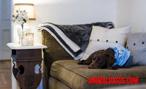 perro aire acondicionado