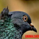 ¿Por qué las palomas mueven la cabeza cuando caminan de esa forma?