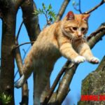 Porque los gatos caen de pie: explicación del enderezamiento